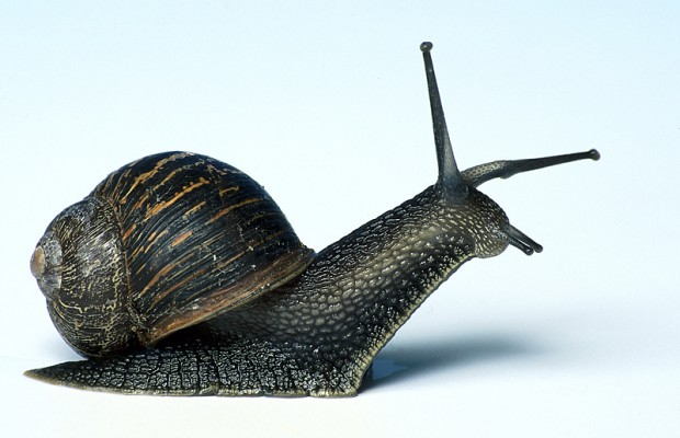 """Scientists Have Figured Out the Actual Definition of """"A Snail's Pace"""""""